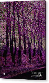 Purple Trees Acrylic Print by Carol Lynch