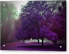 Purple Trees  Acrylic Print