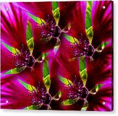 Acrylic Print featuring the photograph Purple Trip by David Stine