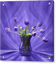 Purple Tulips In Purple Room Acrylic Print