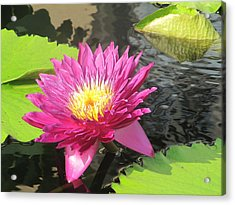Purple Water Lily Acrylic Print by Richard Reeve