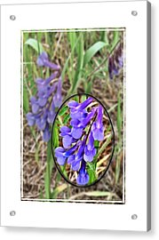 Purple Wildflowers Acrylic Print