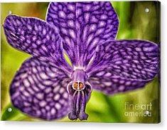 Purple Wonder Acrylic Print