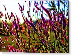 Purpleness Acrylic Print