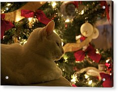 Purrfect Holidays Acrylic Print