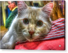 Acrylic Print featuring the photograph Purrfect Companion by Dennis Baswell