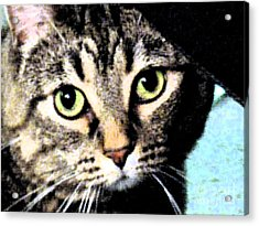 Acrylic Print featuring the photograph Purrfectly Bright Eyed by Nina Silver