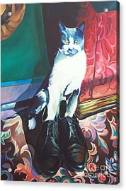 Puss In Shoes.  Acrylic Print