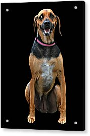 Murray Acrylic Print by Diana Angstadt