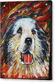 Pyrenean Mountain Dog Acrylic Print by Anastasis  Anastasi