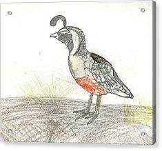 Quail Bird Acrylic Print by Ethan Chaupiz