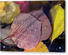 Quaking Aspen Leaves In The South Ponil Acrylic Print by Maresa Pryor