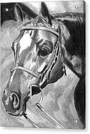 Quarter Horse Hunter Acrylic Print by Olde Time  Mercantile