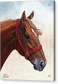 Quarter Horse Acrylic Print by Randy Follis