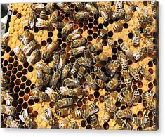 Queen Bee And Her Attendants Acrylic Print