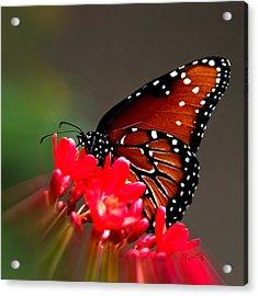Queen Butterfly II Acrylic Print