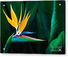 Painted Queen Of The Garden Bird Of Paradise Flower Acrylic Print by Sherry  Curry