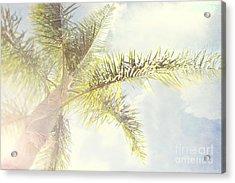 Queen Palm Acrylic Print