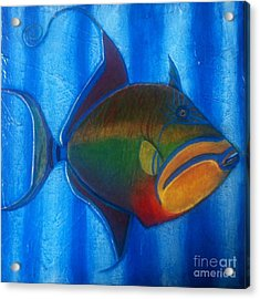 Queen Triggerfish  1 Acrylic Print by Chad Gill