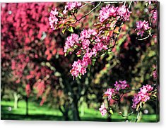 Queens Botanical Garden Acrylic Print by JC Findley