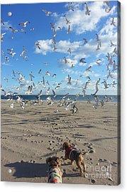 Quick Fly Away Acrylic Print