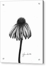 Quiet Comfort Acrylic Print by J Ferwerda