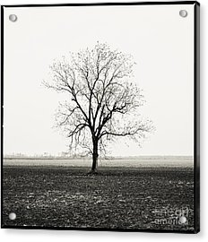 Quiet Desperation Acrylic Print by Scott Pellegrin