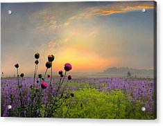 Quiet Evening Acrylic Print by Igor Zenin