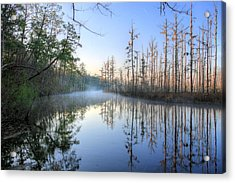 Quiet. Acrylic Print by JC Findley