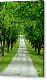 Quiet Path Between Trees Acrylic Print