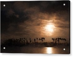 Quiet Sunrise With Fog And Palm Trees Acrylic Print
