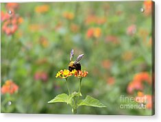 Acrylic Print featuring the photograph Quiet Time by Geraldine DeBoer