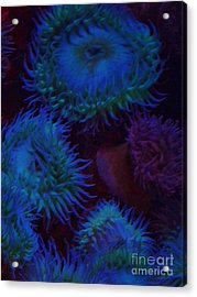 Acrylic Print featuring the photograph Quiet Undersea World by Brigitte Emme