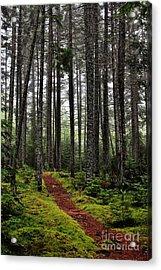 Quiet Woods Acrylic Print