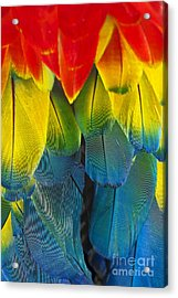 Quillicious... Acrylic Print