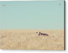 Acrylic Print featuring the photograph Quite Happy Where She Was by Takeshi Okada