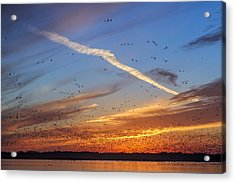 Quivira Sunset 2 Acrylic Print by Rob Graham