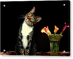 Quizzical Cat Acrylic Print by Linda Mcfarland
