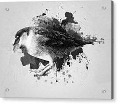 Qush Acrylic Print by Taylan Apukovska