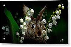 Rabbit In The Lilies Acrylic Print