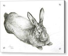 Rabbit Acrylic Print by Jeanne Maze