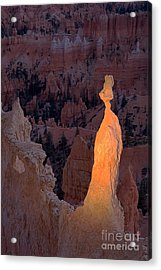 Rabbit Sunset Point Bryce Canyon National Park Acrylic Print