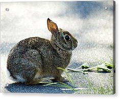 Acrylic Print featuring the photograph Rabbit by Yulia Kazansky