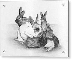 Rabbits Rabbits And More Rabbits Acrylic Print by Nan Wright