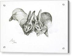 Rabbits Sleeping Acrylic Print by Jeanne Maze