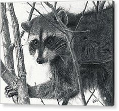 Raccoon - Charcoal Experiment Acrylic Print