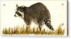 Raccoon In The Grass Acrylic Print by Juan  Bosco