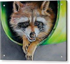 Raccoon  Acrylic Print by Jean Cormier