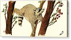 Raccoon On Tree Acrylic Print by Juan  Bosco