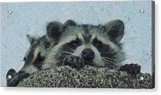 Raccoons Painterly Acrylic Print by Ernie Echols